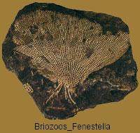 Briozoos_Fenestella